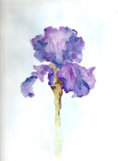 Iris by Barbara Bald