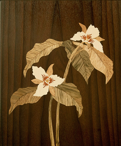 Painted Trillium by Craig Altobello