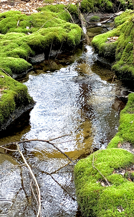 Mossy Creek, Photograph by Jesseca P. Timmons